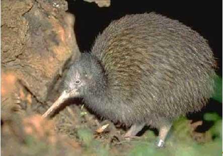 So many animaldid you can learn Few of kiwi andfast fun animal.